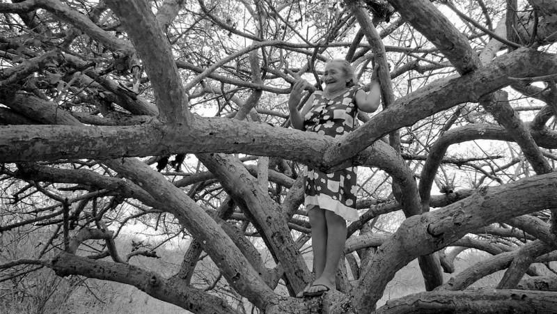 No alto das árvores | Meus Sertões