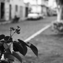 O olhar feminino busca os pequenos detalhes que deixam a cidade mais bela. Foto: Natália Silva