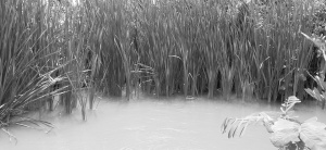 Vegetação encobre o rio Vaza-Barris no perímetro irrigado. Foto: Paulo Oliveira