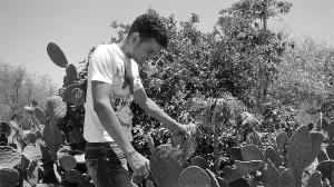 Alessandro Gonçalves mostra a parte da palma (raquete menor) é usada para fazer o doce. Foto: Paulo Oliveira