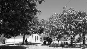 Cerca de 20 famílias moram no povoado de Várzea Grande. Foto: Paulo Oliveira