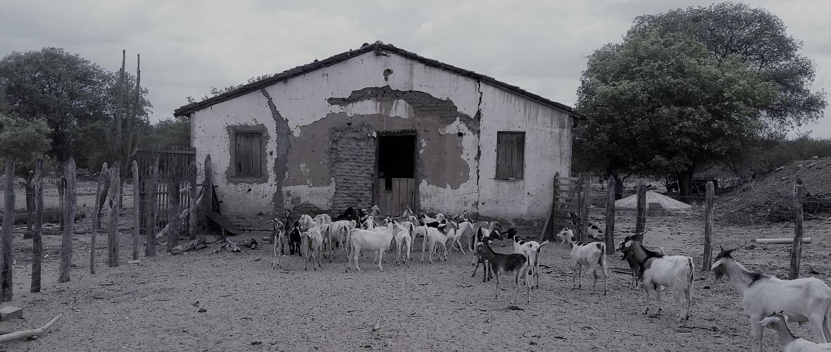 A propriedade abriga 300 cabeças de caprinos e ovinos. Foto: Paulo Oliveira