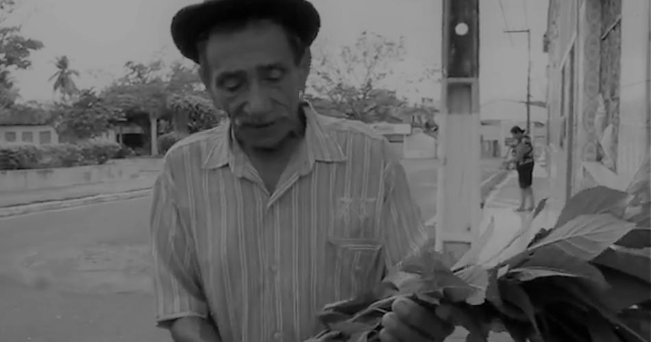 Seu Miguel carrega um galho de alumã. Reprodução do vídeo de Angelina Nunes