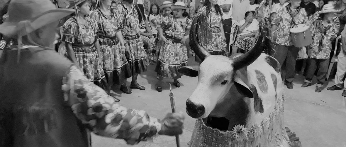 Boi de Dona Laurinha se apresenta em Boa Nova. Foto: Paulo Oliveira