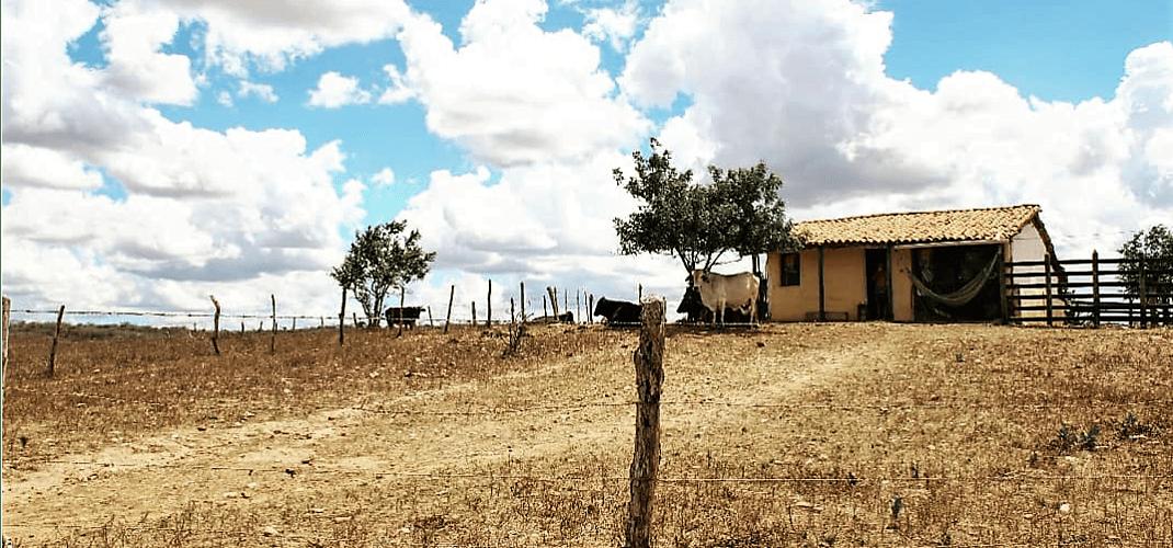 Casa simples no sertão de Itabi_ Foto: Camila Gabrielle