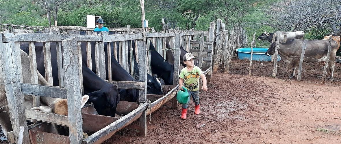 Eduardo, 6 anos, é apaixonado pela vida no campo. Foto: Paulo Oliveira