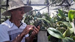 Fotos de centenas de orquídeas na memória do celular.