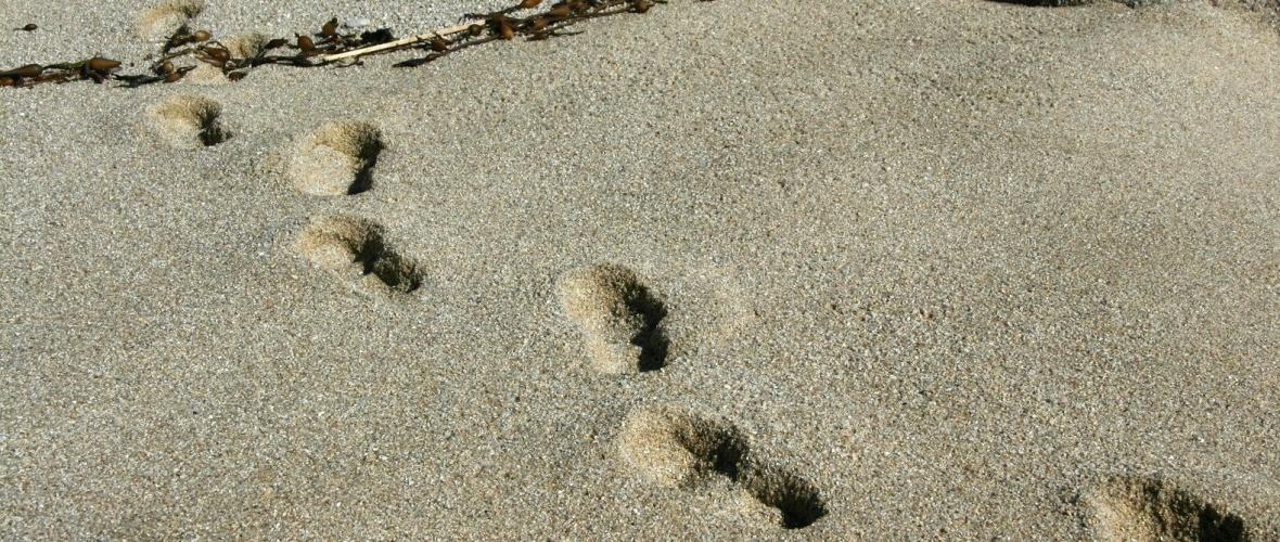 Rastros na areia. Foto: freeimage.com