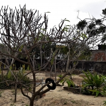 Sepulturas e árvores secas1