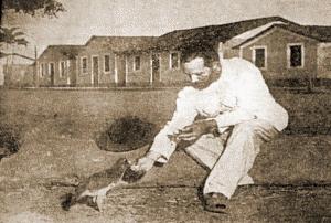 O beato Franciscano dizia que falava com os animais. Reprodução
